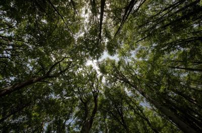 Gestión Forestal UE